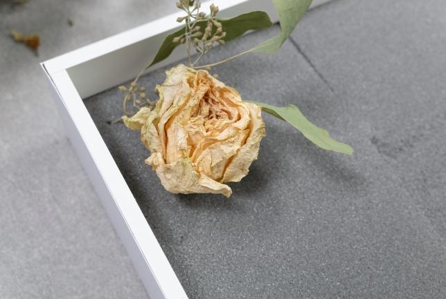 Getrocknete Rose im Steckschaum.